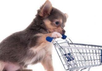Tipps für alle die Hundefutter online bestellen wollen