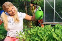 Viele Hobbygärtner schwören auf ein Hochbeet im eigenen Garten