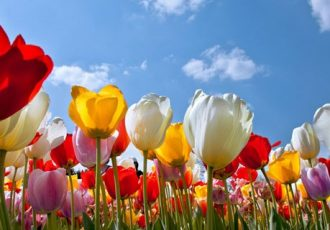 Blumenschmuck ist als Deko nicht nur bei Frauen beliebt
